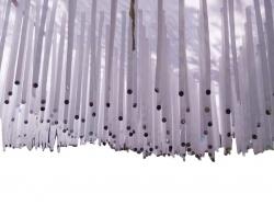 10X10 Satin Fabric Ribbon With Taiwan Cloth - Tikli Work - White Color