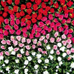4 x 4 Feet Plastic Flowers Wall For Party / Wedding / Reception  / Multi Color