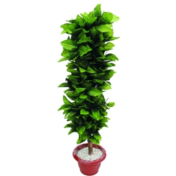 3.5 FT - Artificial Plastic Plant - Flower Tree with Pot - Green Color