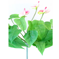 Height  16 Inch - Anthurium Bunches X 3 -  AF- 151 - Leaf Bunch - Light Pink Color