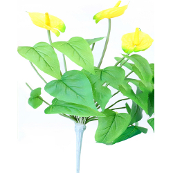 Height  16 Inch - Anthurium Bunches X 3 -  AF- 151 - Leaf Bunch - Yellow Color