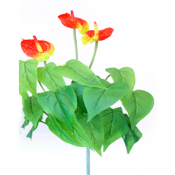 Height  16 Inch - Anthurium Bunches X 3 -  AF- 151 - Leaf Bunch - Red & Yellow Color