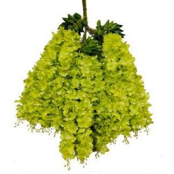 Height - 42 Inch - Hydrengea Wisteriya - Latkan - Flower Decoration - Artificial Latkan - Plastic Latkan - AF 1032 - 662 - Parrot Green Color - 1 Packet ( 12 Pieces )