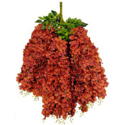 Height - 42 Inch - Hydrengea Wisteriya - Latkan - Flower Decoration - Artificial Latkan - Plastic Latkan - AF 1032 - 764 - Dark Red Color - 1 Packet ( 12 Pieces )