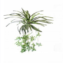 24 Inch - Artificial Wall Hanging - Decoration - Green Color